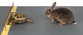 rythme entre lapin et tortue
